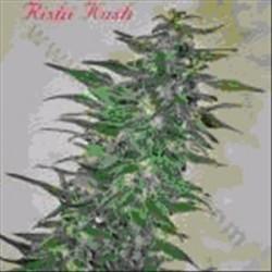 RISHI KUSH * MANDALA SEEDS 10 SEMI REG
