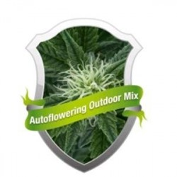 AUTOFLOWERING  MIX * ROYAL QUEEN SEEDS   3 SEMI FEM