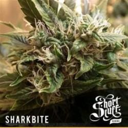 SHARKBITE * SHORT STUFF SEEDS   5 SEMI FEM