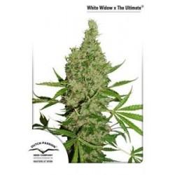 WHITE WIDOW X THE ULTIMATE® * DUTCH PASSION 10 SEMI REG