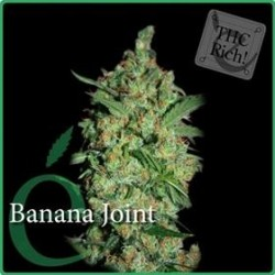 BANANA JOINT * ELITE SEEDS 7 SEMI FEM
