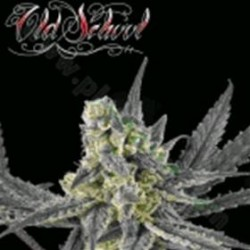 OLD SCHOOL * RIPPER SEEDS   5 SEMI FEM
