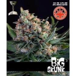 BIG SKUNK  * PURE SEEDS   5 SEMI FEM