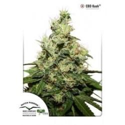 CBD KUSH ® * DUTCH PASSION 10 SEMI FEM