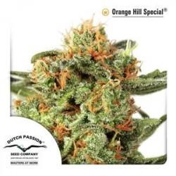 ORANGE HILL SPECIAL® * DUTCH PASSION 10 SEMI REG