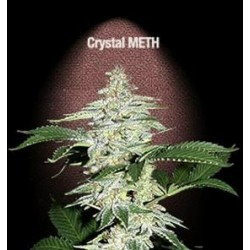 CRYSTAL M.E.T.H.  * FAST BUDS SEEDS  3 SEMI FEM