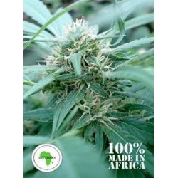 MOZAMBICA  *SEEDS OF AFRICA 12 SEMI REG