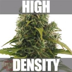 HIGH DENSITY AUTO * HEAVYWEIGHT SEEDS   3 SEMI FEM