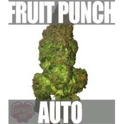 FRUIT PUNCH AUTO * HEAVYWEIGHT SEEDS   3 SEMI FEM