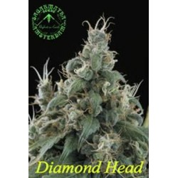 DIAMOND HEAD * SAGARMATHA 10 SEMI REG