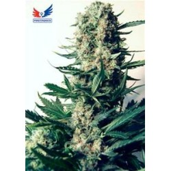 CRITICAL # 47 * POSITRONICS FEMINIZED   3 SEMI