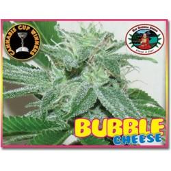 BUBBLE CHEESE * BIG BUDDHA   5 SEMI FEM