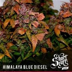 HIMALAYA BLUE DIESEL * SHORT STUFF SEEDS 10 SEMI REG