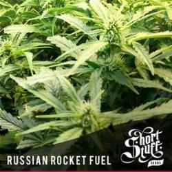 RUSSIAN ROCKET FUEL * SHORT STUFF SEEDS 10 SEMI REG
