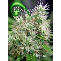ALEGRIA * KIWISEEDS 10 SEMI REG