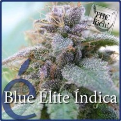 BLUE ELITE INDICA * ELITE SEEDS 7 SEMI FEM