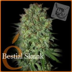 BESTIAL SKUNK * ELITE SEEDS 3 SEMI FEM