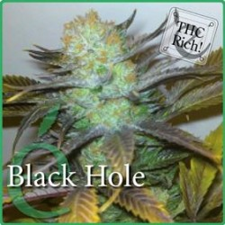 BLACK HOLE * ELITE SEEDS 3 SEMI FEM