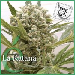 LA KATANA * ELITE SEEDS 3 SEMI FEM
