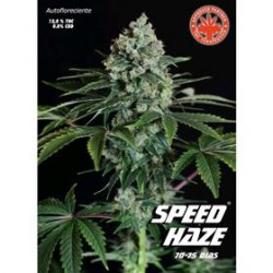 SPEED HAZE  * PURE SEEDS  5 SEMI FEM