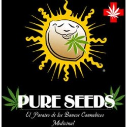 COLLECTOR 1 * PURE SEEDS  6 SEMI FEM