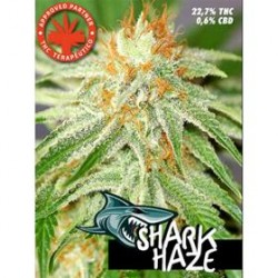 SHARK HAZE * PURE SEEDS  10  SEMI FEM