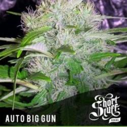 AUTO BIG GUN *BOUTIQUE LINE  SHORT STUFF SEEDS   5 SEMI FEM