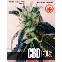 CBD PURE* PURE SEEDS   5 SEMI FEM