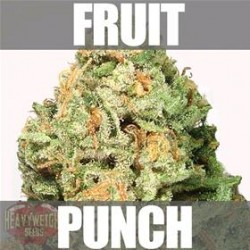 FRUIT PUNCH * HEAVYWEIGHT SEEDS   5 SEMI FEM