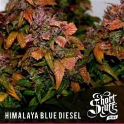 HIMALAYA BLUE DIESEL * SHORT STUFF SEEDS   3 SEMI FEM