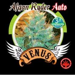 AFGHAN RYDER AUTO * VENUS GENETICS  1 SEME FEM