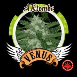 AKTOMBE* VENUS GENETICS 10 SEMI FEM