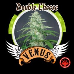 DOUBLE CHEESE * VENUS GENETICS  5 SEMI FEM