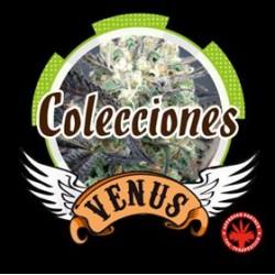 COLLECTION 1* VENUS GENETICS  6 SEMI FEM