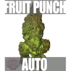 FRUIT PUNCH AUTO * HEAVYWEIGHT SEEDS  10 SEMI FEM