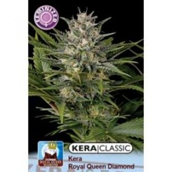 KERA ROYAL QUEEN DIAMOND * KERA SEEDS CLASSIC 5 SEMI FEM