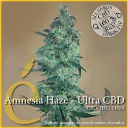 AMNESIA HAZE ULTRA CBD  * ELITE SEEDS 7 SEMI FEM