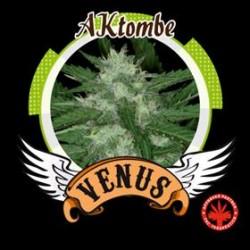 AKTOMBE* VENUS GENETICS 25 SEMI FEM