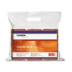 COCO BRIX PLAGRON 6 PZ