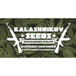FEM MIX PACK *KALASHNIKOV SEEDS  16 SEMI FEM