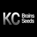 K.C.Brains