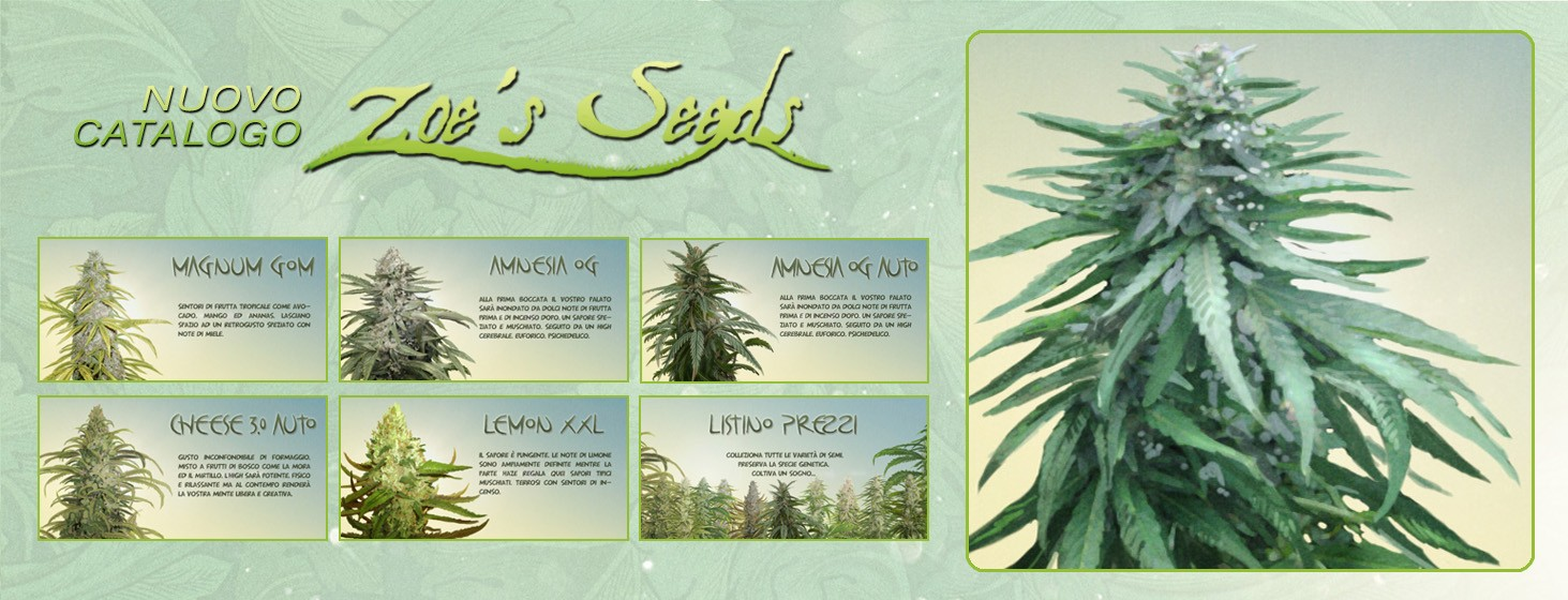 Nuovo catalogo Zoe's Seeds